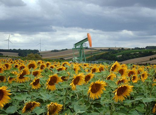 oil-well-sunflowers
